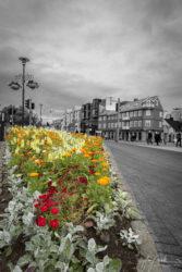 Flowers on the Street (Reykjavík Laekjagarta 2019)