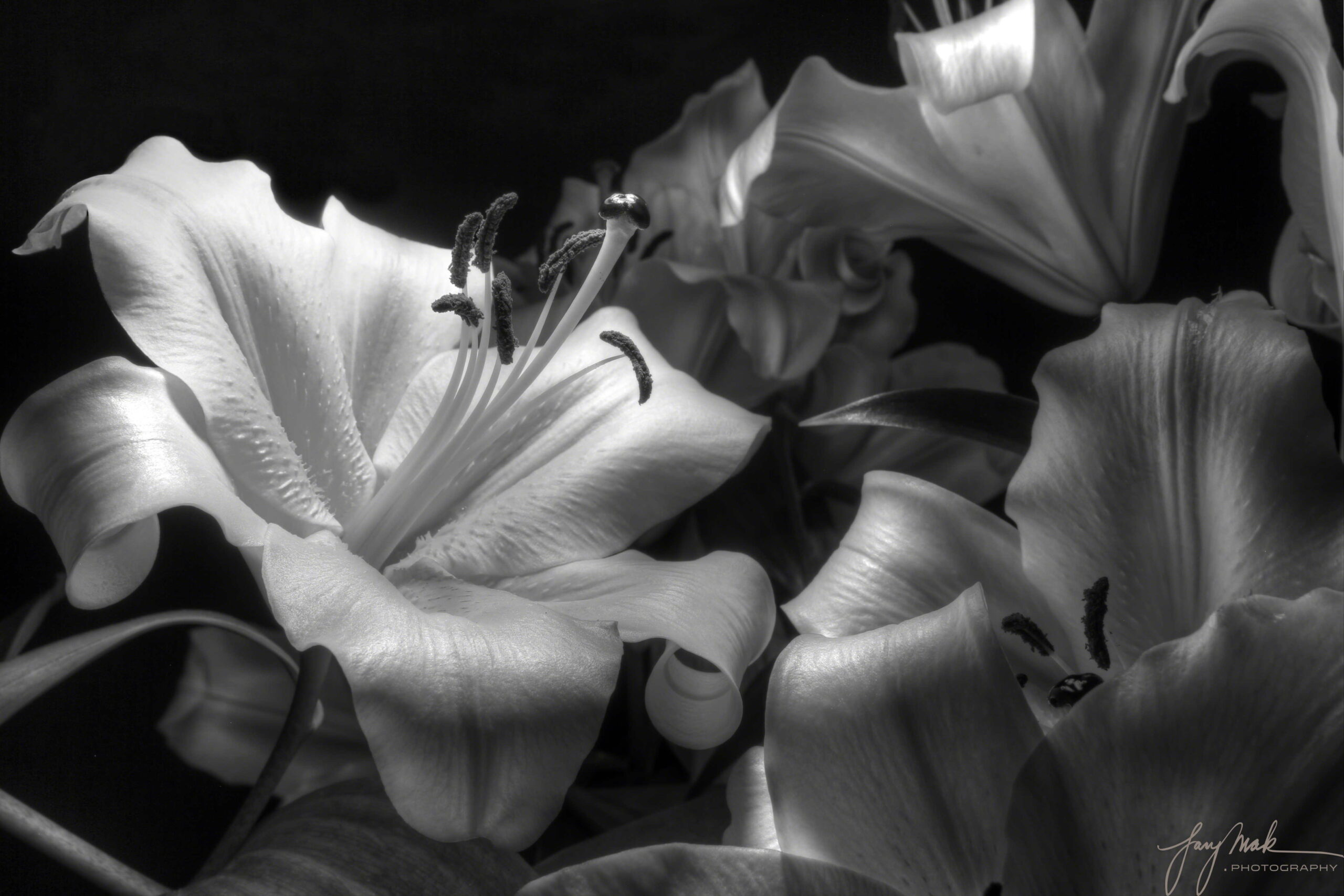 Lillies in Monochrome
